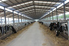 Automation And Sanitary Pre-made Steel Structural Cowshed Framing Systems